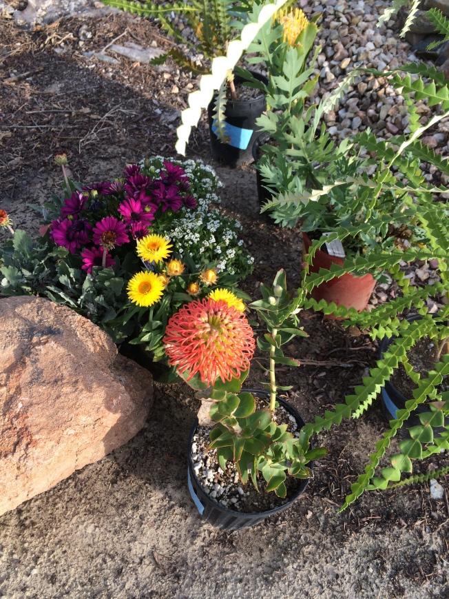 The Art of Gardening!