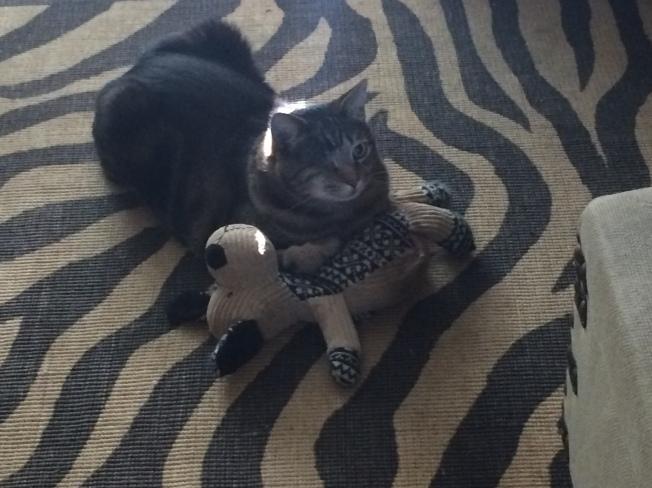 Kramer the one eyed cat!