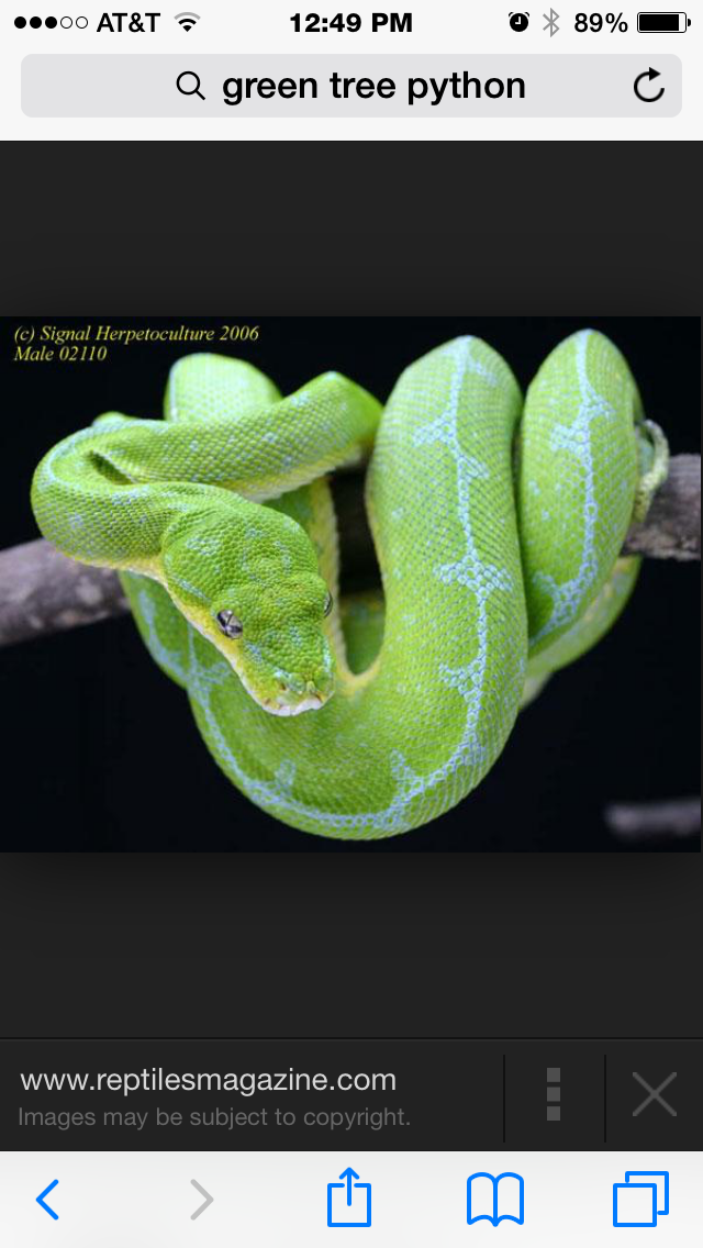 Green Tree Python...... Not great pets especially for an 8 year old!