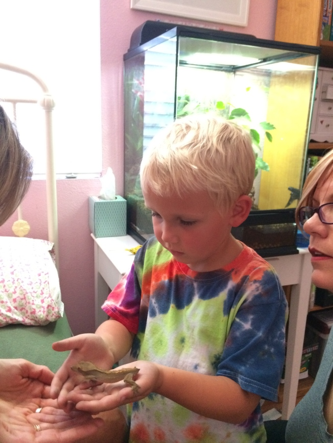 Nolan's first time with a gecko