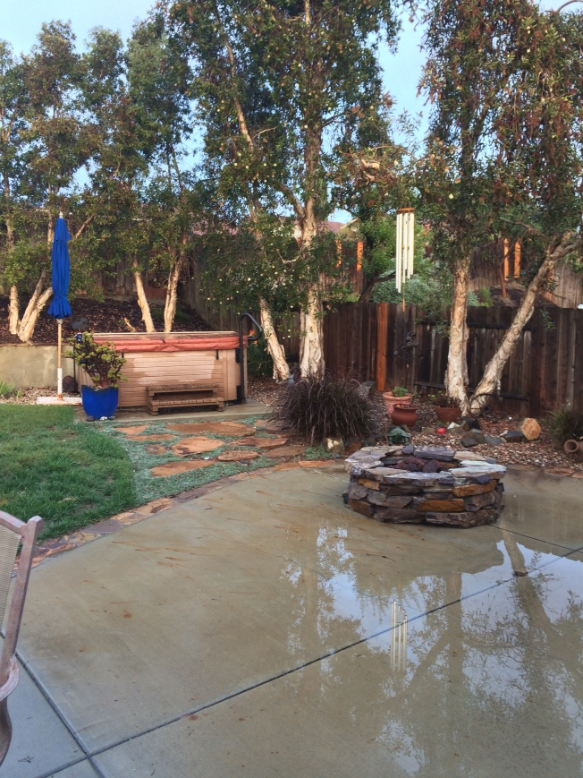 Right side of yard