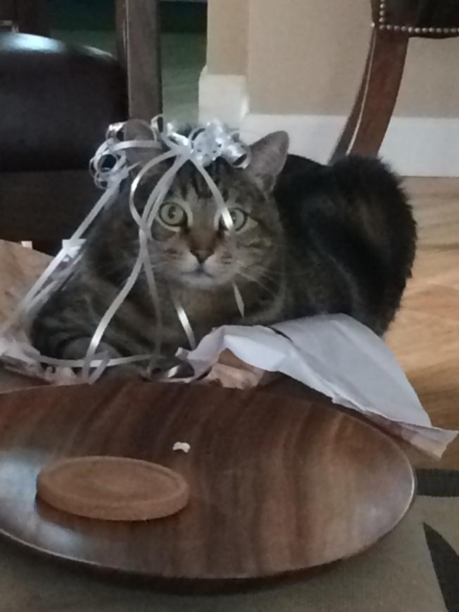 Kramer being a kitty