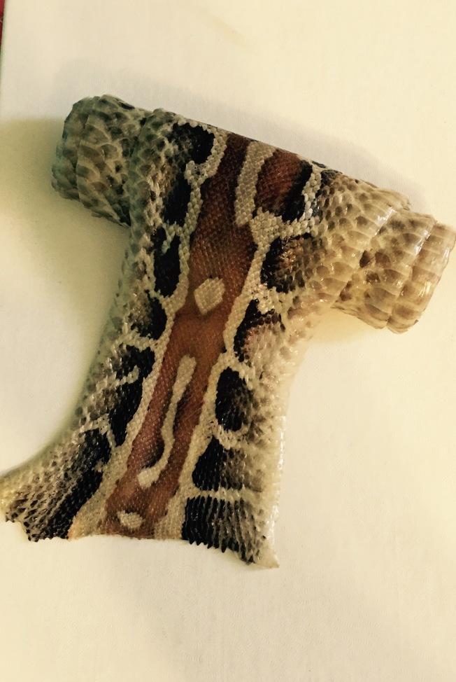 Snake skin after tanning.