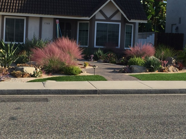 New Drought Tolerant Landscaping