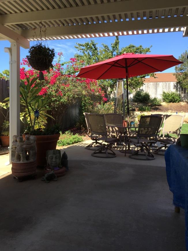 My backyard on a HOT day